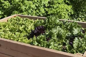 Hochbeet Blumen Bepflanzen : urban gardening kisten und co als alternativer garten gartengestaltung garten ~ Whattoseeinmadrid.com Haus und Dekorationen