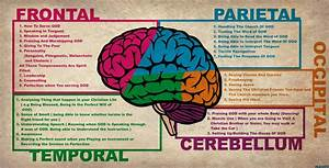 Brain Functions Diagram Human Brain Parts And Functions ...