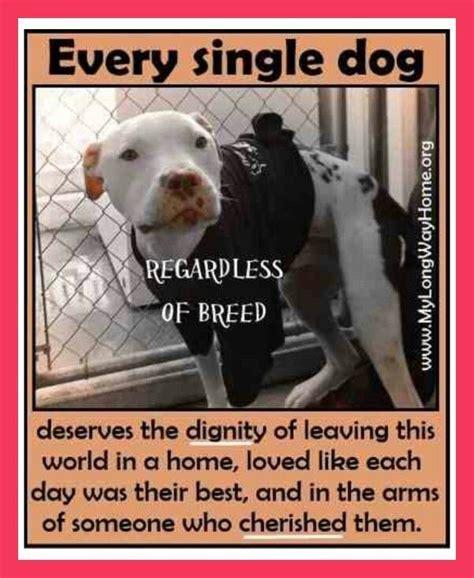 animal deserves kindnesstoysa warm bed  luv