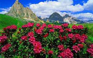 Mountain Flowers Pink Roses And Green Meadows With Grass ...