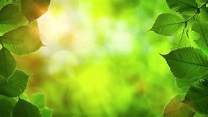 Natural, Frame, Of, Beautiful, Green, Stock, Footage, Video, 100, Royalty