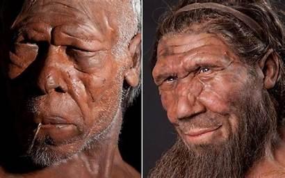 Homo Humans Early Neanderthal Reconstruction Neanderthals Ancestors