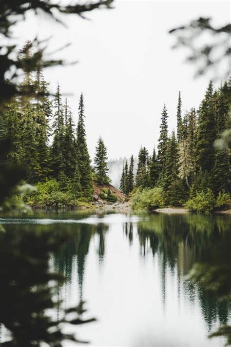 lake forest ideas  pinterest forest landscape