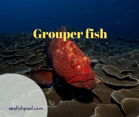 fish grouper taste facts