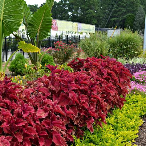 what plants are annuals late summer garden tips fairview garden center