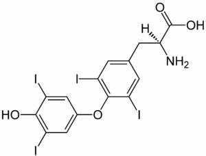 L Thyroxin Dosis Berechnen : hypothyreose biologie ~ Themetempest.com Abrechnung