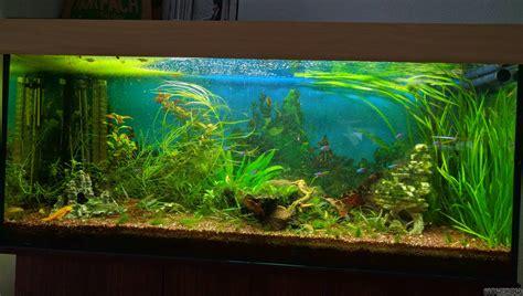 aquarium flowgrow aquascapeaquarien datenbank