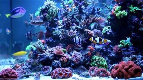 saltwater aquariums chemical filtration in aquariums mad hatter s reef