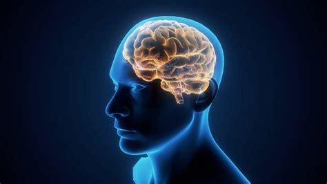 study understanding critical components   brain