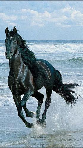 horse fuer android kostenlos herunterladen  wallpaper