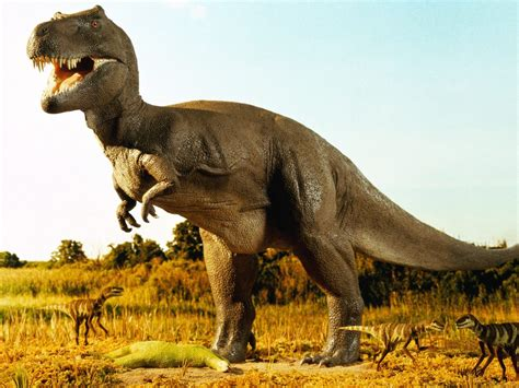 Animal Dinosaur Wallpaper - hd animal wallpapers hd dinosaurs wallpapers
