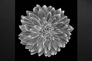 Tableau Moderne Noir Et Blanc : tableau design dalhia noir et blanc izoa ~ Teatrodelosmanantiales.com Idées de Décoration