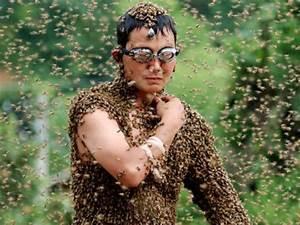Was Essen Wespen : was haltet ihr von wespen seite 37 allmystery ~ Frokenaadalensverden.com Haus und Dekorationen