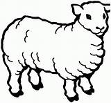Coloring Pages Sheep Printable Animal sketch template