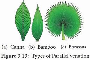 Leaf - Characteristic features, Functions, Types, Parts of ...