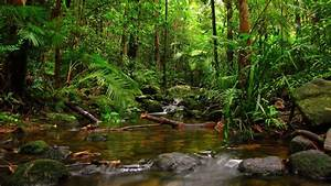 Top 10 Most Beautiful Tropical Rainforests