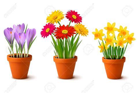 pictures of flowers in pots flower pot part 1 weneedfun