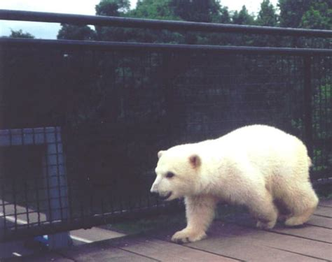 archiv zoo jan feb