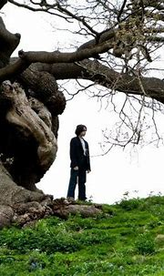 Severus Snape   Lily potter, Severus snape lily evans