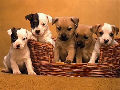 Puppy Puppies Wallpapers Very Dogs Nice 3d