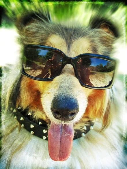 doggles dog glasses dogica  doggles ils dog