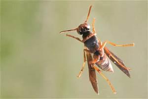 Fliegen Im Fensterrahmen : wespen aus dem fensterrahmen vertreiben so geht 39 s ~ Buech-reservation.com Haus und Dekorationen