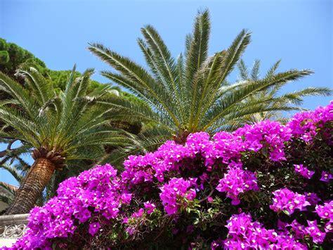 fiori in italia alassio bloemenriviera itali 235 www alassio nl