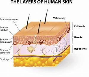 Common Skin Disorders  Description  Treatment And Prevention