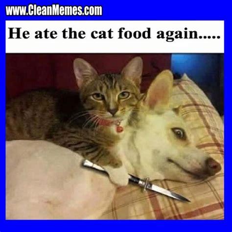 Funny Cat Memes Clean - cat memes clean memes the best the most online page 3 black cats pinterest cat memes