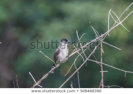 different types of birds that sing different types of birds stock photos royalty free images vectors