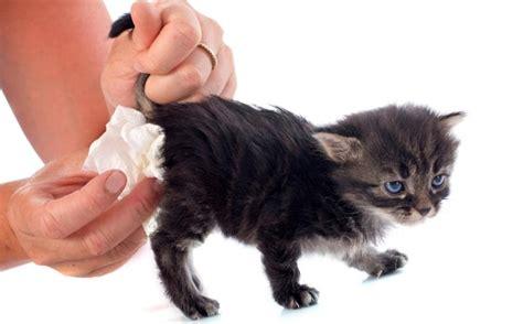 Cat sterilization