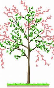 Kirschbaum Richtig Schneiden : sauerkirschen richtig schneiden pinterest planta baixa casa horta jardim e plantas baixas ~ Frokenaadalensverden.com Haus und Dekorationen
