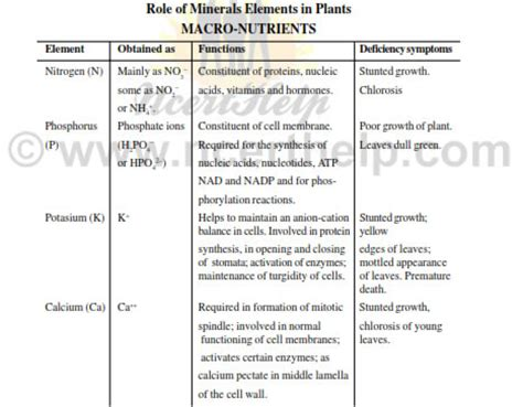 mineral nutrition ncert notes  class