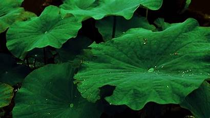Plants Plant Gifs Water Nature Animated Drops