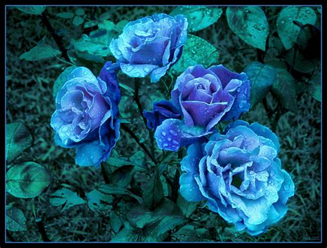 Floare albastră | eLitere