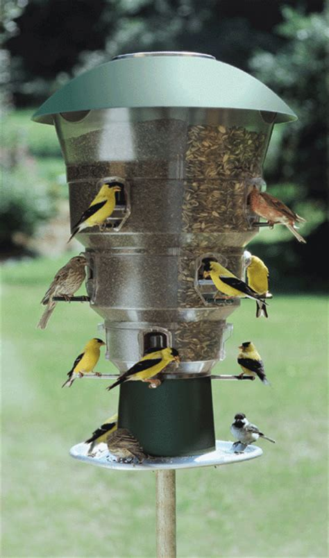 wild bills 12 port anti squirrel bird feeder attracts