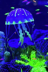 Colorful Jellyfish Photograph by Natalia Ochkalo