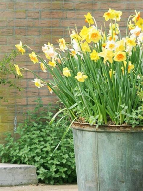Cool Daffodils Decor Ideas Welcome Spring Digsdigs