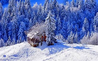 Snow 4k Winter Background Ice Trees Wallpapers