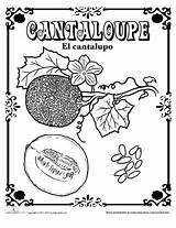 Spanish Cantaloupe Coloring Education Pages Worksheet Fruits Vegetables English Fruit Zucchini Learning Plants Plant sketch template