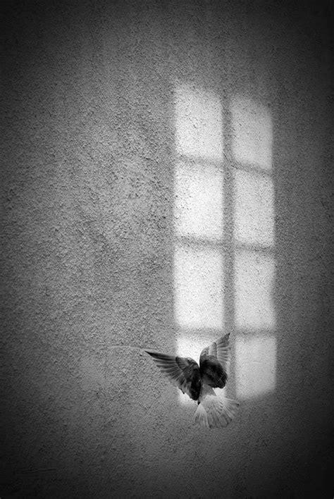Interessante Ideenunterarm Taetowierung Weisse Taube by Die Besten 25 Vogel Schwarz Wei 223 Ideen Auf