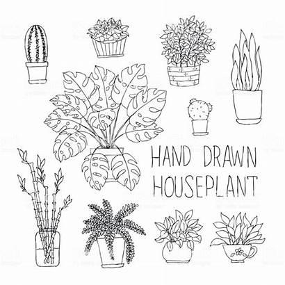 Monstera Cactus Doodle Plant Fern Bamboo Houseplants