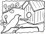Coloring Bird Birdhouse Pages Printable Drawing Feeder Drawings sketch template