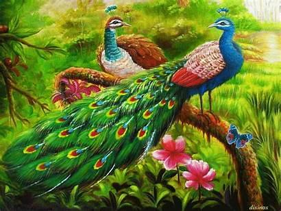 Animated Peacocks Peacock Animation Gifs Lovethispic Hermosos