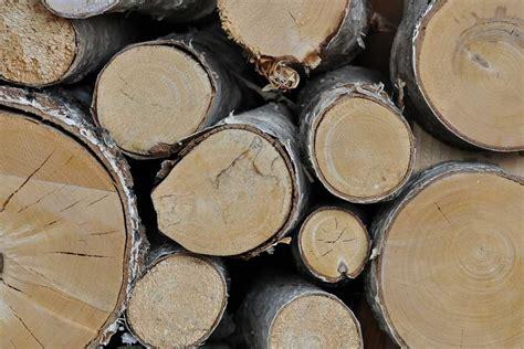 Brennholz Welche Holzarten Besonders Geeignet Sind by Birke Das Ideale Brennholz Brennholz Eu