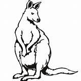 Kangaroo Coloring Animal sketch template