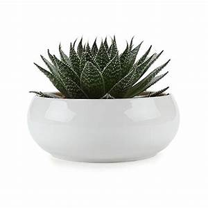 T4U 6.5 Inch Ceramic White Round Simple Design succulent ...