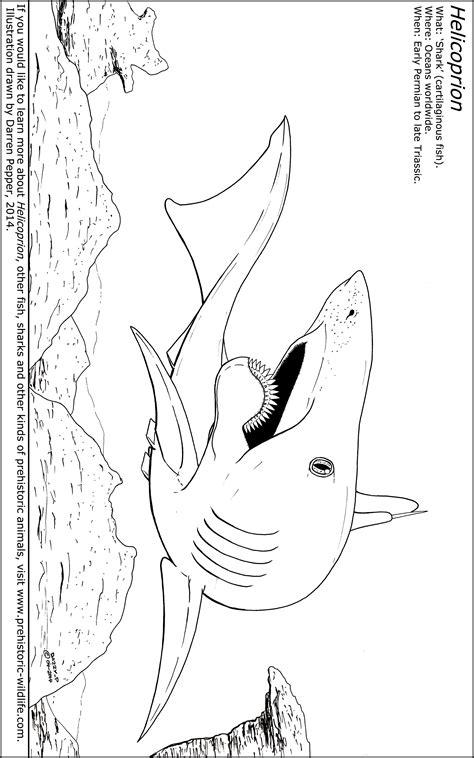 Wildlife Of China Worksheet