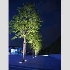 Best 25+ Outdoor Tree Lighting Ideas On Pinterest Lights