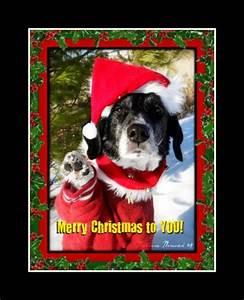 Caption Ideas for Christmas Cards